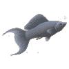 pet-destaque-id-64-molinesia-77f42bc3184