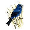 pet-destaque-id-8-azulao-f818ed89f5f976f