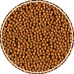 alcon-ciclideos-granulos